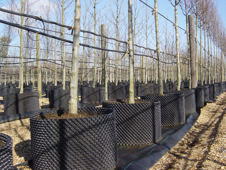 Airpot Container growing system for trees, shrubs, hedging and topiary