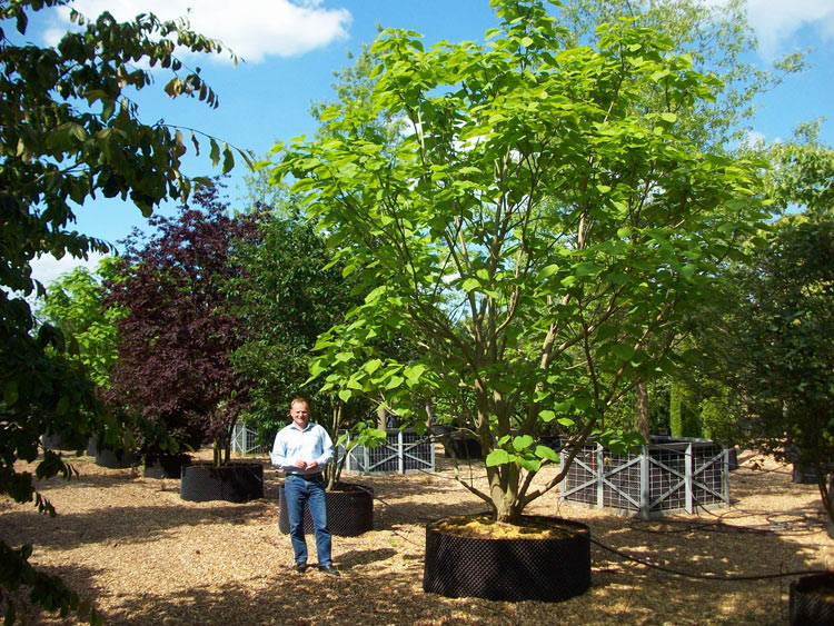 Deepdale Trees, Potton - Tree Nursery