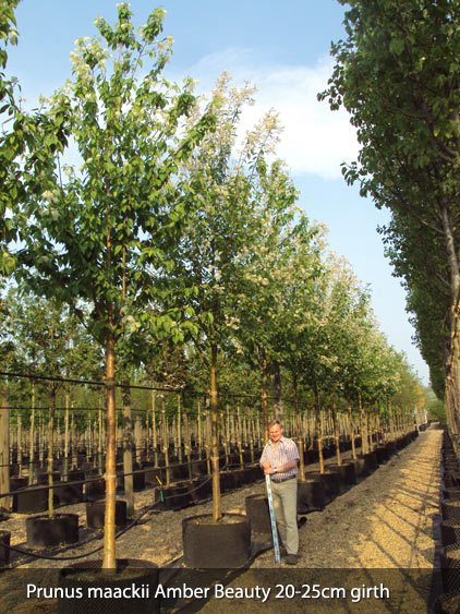 Deepdale Trees Current Tree Stock List Container And