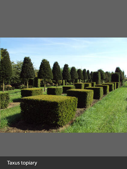 Field Grown Topiary
